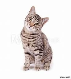 Malvorlage Sitzende Katze Quot Sitzende Getigerte Katze Quot Stockfotos Und Lizenzfreie
