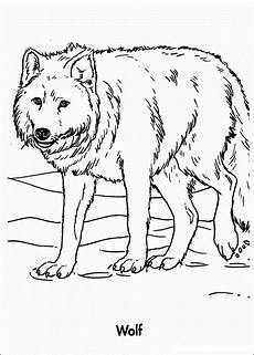 malvorlagen fur kinder ausmalbilder wolf kostenlos