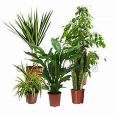 Pack 5 Plantes D 233 Polluantes D Int 233 Rieur V2 Mat 233 Riel Mur