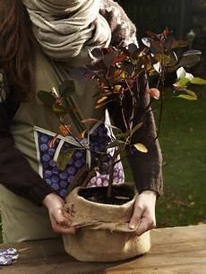 Gartentipps So Machen Sie Ihre Pflanzen Winterfest