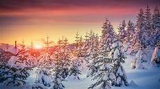 4k wallpaper nature winter wallpaper pines 5k 4k wallpaper 8k snow sunset