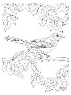 realistic northern mockingbird coloring page free