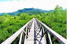 Jembatan Mangrove Trenggalek Azizalkayis