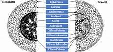 Struktur Dan Fungsi Jaringan Akar Mikirbae