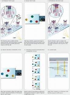 illumina ngs sequencing illumina sequencing overview evolutionary genetics