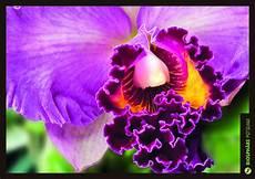 orchideen workshop 01 12 2017 biosph 228 re potsdam