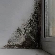 feuchteschutz das kann gegen zu hohe luftfeuchtigkeit