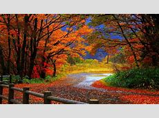Fall Foliage Wallpaper for Desktop ·? WallpaperTag