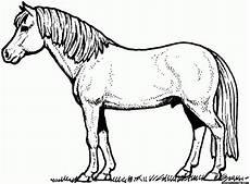 Ausmalbilder Pferde Images Resume Resume Templates Image Search Malvorlagen