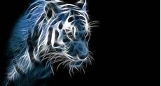 tigers fractalius light painting 1595x859 wallpaper high quality wallpapers high definition