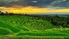 Wallpaper Pemandangan Sawah Dan Gunung Stok Wallpaper