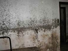 18 Best Images About Black Mold The Effective Way On