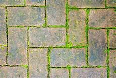 moos steinen entfernen top mittel gegen moos auf steinen kb67 casaramonaacademy
