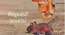faire fuir les souris anti souris 10 trucs et r 233 pulsifs contre les souris