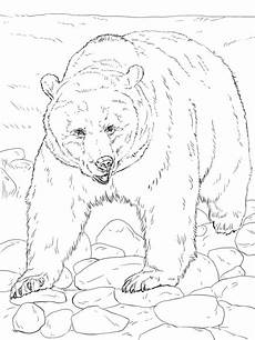 Ausmalbilder Tiere Nordamerika Ausmalbilder Tiere Nordamerika Tiffanylovesbooks