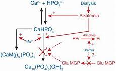 transaminases élevées causes 23 best liver enzymes images on alkaline phosphatase high shell and shells