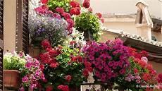 foto di giardini fioriti spello balconi e vicoli fioriti 2014 hd