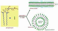 types of lipids 3 types of lipids different types of lipids chemistry tutorvista com