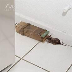 maus in der wohnung fangen gardigo maus lebendfalle 3er set m 228 use fangen ohne problem