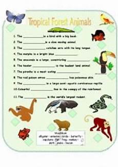 rainforest animals worksheets elementary 13860 tropical forest animals esl worksheet by p