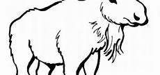 Ausmalbilder Hase Und Wolf Ausmalbilder Hase Und Wolf
