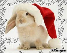 christmas bunny picture 126732870 blingee com
