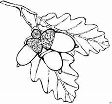 Malvorlagen Herbst Blumen Eicheln Und Blaetter Ausmalbild Malvorlage Blumen Mit