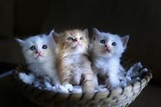 cute tiny kittens 4k ultra hd wallpaper background image 4983x3322 id 926762 wallpaper abyss