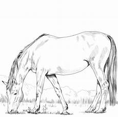Ausmalbilder Pferde Hannoveraner Hanoverian Coloring Page Free Printable Coloring Pages