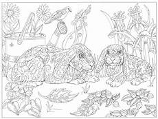 ausmalbilder erwachsene insekten aiquruguay