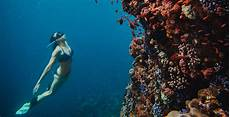 freediving the islands east of flores underwater photo gallery
