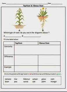types of plants worksheets for grade 2 13744 happy learners parts of a plant plants worksheets parts of a plant roots