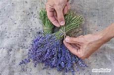 lavendel gegen wespen wespen nat 252 rlich fernhalten effektiv und schonend mit