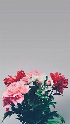 flower wallpaper for phone screen 1816 best backgrounds images on backgrounds