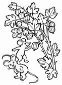 Coloring Page  Gooseberry