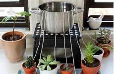 comment arroser ses plantes pendant les vacances comment arroser mes plantes lorsque je suis absent