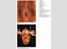 female reproductive system functions