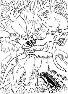 free coloring pages of animals in the rainforest 17397 the daily of lemurkat colouring pages
