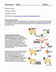 cloning fact sheet biological science picture directory pulpbits net
