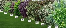haie basse fleurie feuillage persistant fleur de