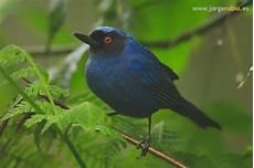 Gambar Burung Jenis Burung Foto Burung Kicau Burung