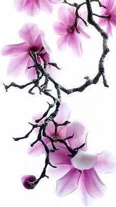 magnolia flower iphone wallpaper apple iphone 6s wallpaper with purple magnolia flowers