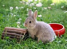 kaninchen besch 228 ftigung spielzeug f 252 r kaninchen