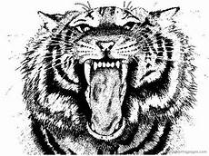 tiger coloring pages to and print for free