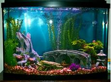 How To Decorate Your Boring Fish Tank Pouted