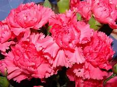 fiore con s flowers around the world the national flower every