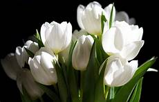 White Flowers Hd Images by White Flower Images Five Hazy White Lillies With Green