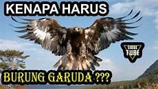 Gambar Burung Garuda Asli Gambar Burung Wallpaper