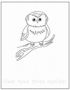 woodland animals coloring pages 17187 free forest animals coloring pages with traceable facts preschool powol packets