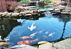 Bentuk Kolam Ikan Koi Dan Ikan Hias Air Kolam Pegunungan